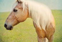 silly pony / by Apron Betty