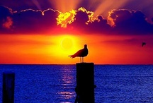 Sunrise , Sunsets / Behold our beautiful mother earth / by Karma Couture
