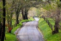 Country Life's Visual Pleasures