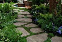 Garden / by Laurynn Littlefield