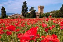 Tuscan, France, Spain, Greek Isles, English and other scenic places / by Karma Couture