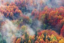 TREES / Nature | árboles * arbres * bäume * árvores * alberi * copaci