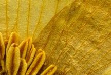 """YELLOW / Color 