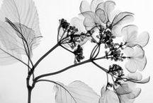 BLACK & WHITE / Color