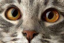 CATS / Nature | gatos * chats * gatti * katzen * pisici