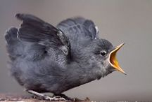 BIRDS / Nature