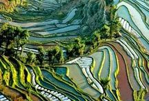 CHINA / Asia | Travel | Places | Sites | History | People | Culture | Food | Tips |  中国 / by Tere Sa