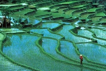 INDONESIA / Asia | Travel | Places | Sites | History | People | Culture | Food | Tips