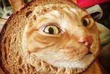 "Bread! Bread! Bread! / ""If thou tastest a crust of bread, thou tastest all the stars and all the heavens."" --Robert Browning / by Joan Halbig"