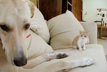 Dogs / DOG is GOD Spelled Backwards / by Joan Halbig