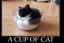 """Cats  =^..^=  In Boxes & Other Containers / """"A cat will assume the shape of its container."""" Unknown / by Joan Halbig"""