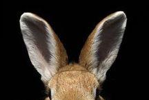 RABBITS / Nature | Animals | Rabbit | Bunnies