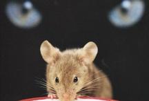 RODENTS / Nature | Animal |  Rats | Mice