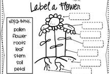 Teaching Ideas (teachingideas) on Pinterest