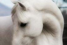 HORSES / Nature | Animal | Horse * Donkey * Burro * Zebra * Horse-like Animals