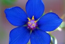 FLOWERS - BLUE / by Tere Sa