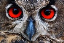 BIRDS - PREY / Nature | a bird that kills and eats small birds and animals