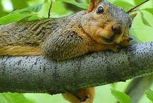 SQUIRRELS & CHIPMUNKS / Nature | Animal | Squirrel | Chipmunk | Cute