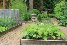 Garden Advice / Tips and advice for the gardening. Sign up for the Queen of Green digest here: http://bit.ly/taCWFz
