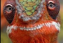 REPTILES & AMPHIBIANS / Nature