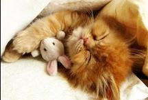 CATS - SLEEPING / Nature | Animals | Cats