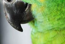 BIRDS - PARROTS / Nature | Birds | Psittacidae: Parrots, Parakeets, Mawcaws, Cockatoos