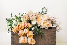 weddings / by Julia Kostreva