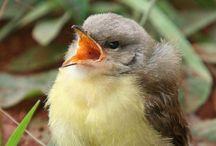 Birds...Songbirds, Ground Birds, Corvids, Woodpeckers, etc.