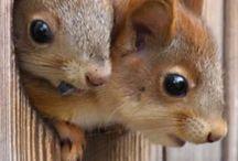 Squirrely Squirrels & Chippy Chips