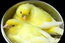 Birds...Domestic Beauties!