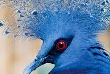 Birds...Exotic Beauties!