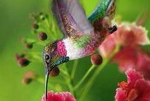 Birds...Little Hummers