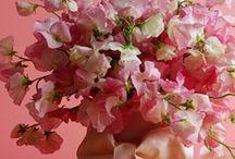 Sweet Peas...April's Birth Flower