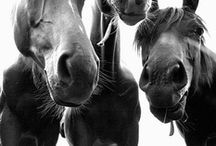 HoRsEs:::RiDiNg:::ThAt SmEll / by Esther FM