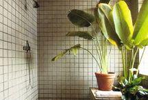 Plants / by Gemma Petrie