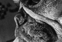Animal photography / Animals