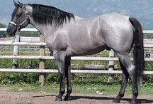 Beautiful Horses & Horsey Stuff / by Libby Throckmorton