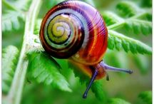 Molluscs / Resources and ideas for exploring the world of molluscs