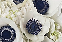 Blue and White Flowers / Blue and white wedding flowers