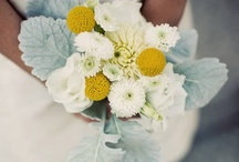 Grey, White and Yellow Flowers / Grey white and yellow wedding flowers Classic Color Combo