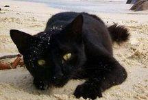 Ocd / Obsessive cat disorder