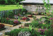 Garden - Someday