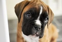 puppy love / by Rebeka Marleen Moreno
