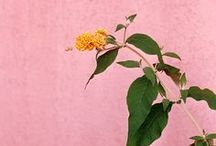 tutti i fiori / by Justina Blakeney