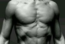 Male Anatomy / Male Anatomy Studies