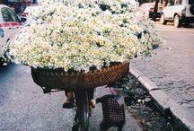 brown paper packages / ... ii. (I speak in flowers.)