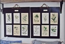 Curiosities, Botanicals, Butterflies & more / A collection of beautiful botanical prints and ideas with prints as well as butterflies, birds, insects and curiosities like antlers and even taxidermy or just collections that makes you curious. All these things inspire me and I'm sure you too!