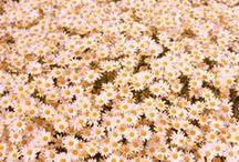Flower Power / Flower children, flower pictures, floral arrangements, beautiful things in bloom.