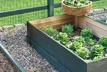 Garden Ideas / Growing tips, planting advice and beautiful garden design for gardeners of all skill levels.