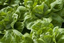 Farm to Table / Inspired ideas and instruction for maximizing your Victory Garden's output